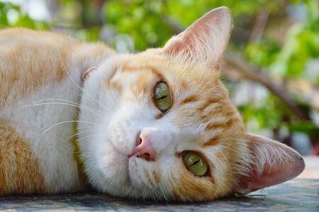 ginger cat portrait in the garden
