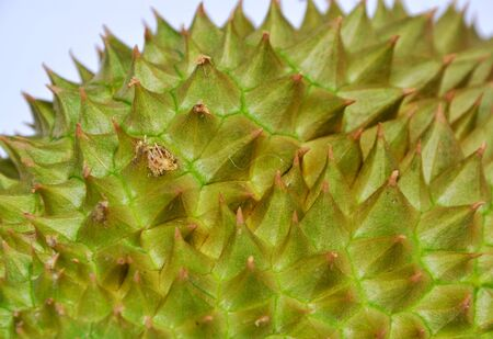 thorn: durian thorn texture and background