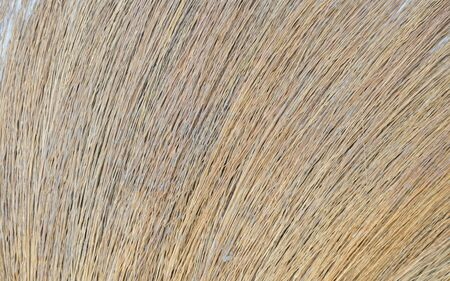 broom handle: close up of broom grass texture and background Stock Photo