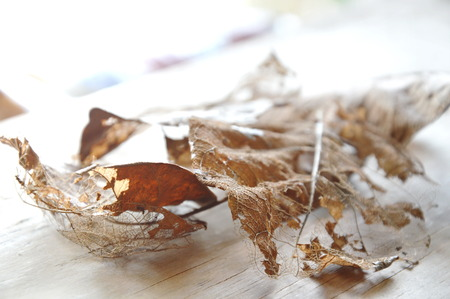 dry brown leaf decompose structure on wooden board Stock Photo