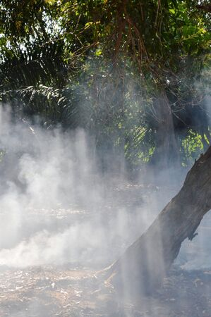 smolder: sunlight through smoke from leaf burning in garden