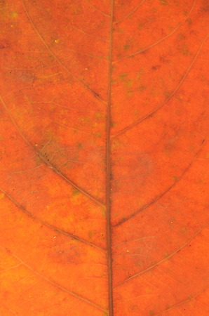 brown dry leaf texture and background Stock Photo