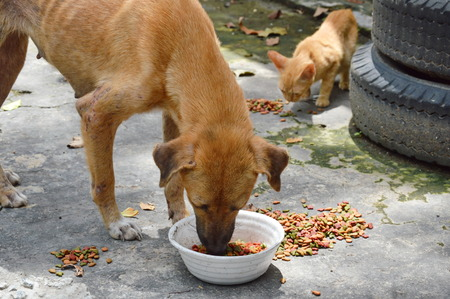 pity: street dog and ginger kitten feeding instant dried food in car junkyard