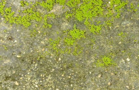 moss growth on cement ground