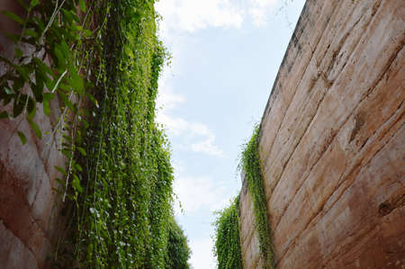 limestone wall decorating by ivy plant climb and hanging