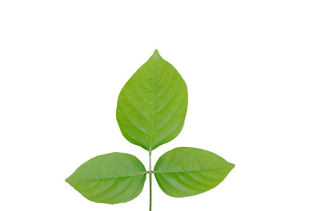three leaf texture on white background