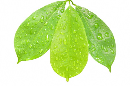 drop of water on leaf in white background Stock fotó