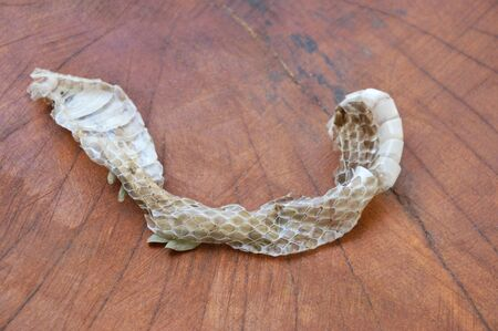 snake slough skin on wooden board Stock Photo