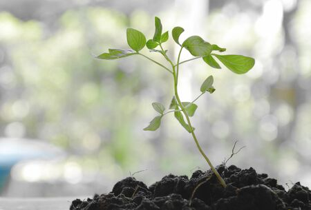 litter plant growth in dirt on garden Stock Photo
