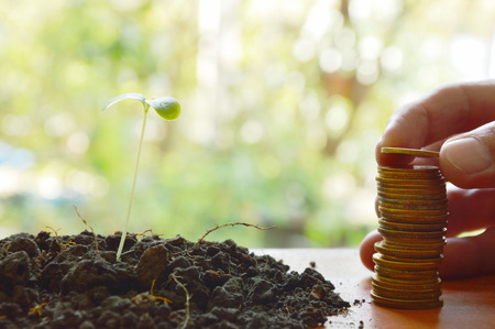 rusty nail: hand putting gold coin arrange and little plant in dirt on wooden board Stock Photo