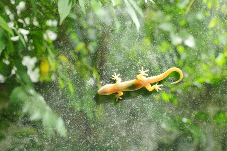 lagarto colgando aún para tomar el sol en la puerta de cristal con fondo de jardín