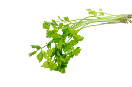 fresh Chinese celery with drop of water on white background