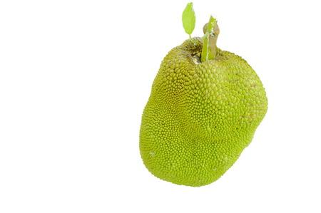 jack fruit tropical fruit on white background Stock Photo