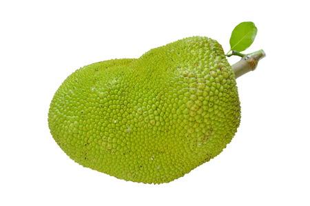 jack fruit tropical fruit on white background Фото со стока