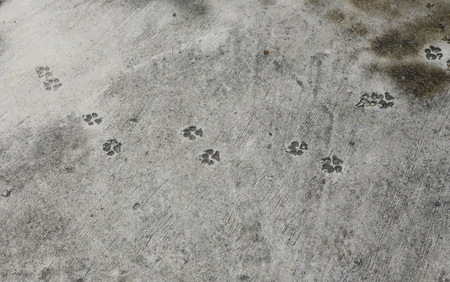 dog footprint messy on cement ground in park