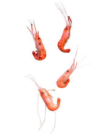 steamed shrimp with salt on white background Stock Photo