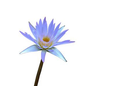 lotus lily flower isolated on white background Stock Photo