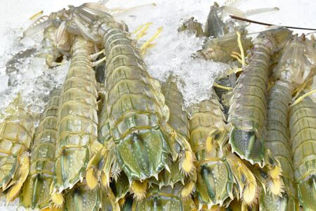 crayfish or mantis shrimp frozen on ice for cooking at restaurant in Thailand