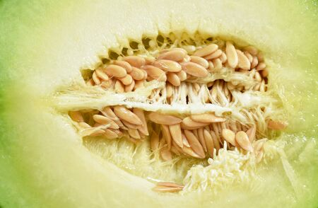 close up of Japanese green melon seed half cutting background and texture