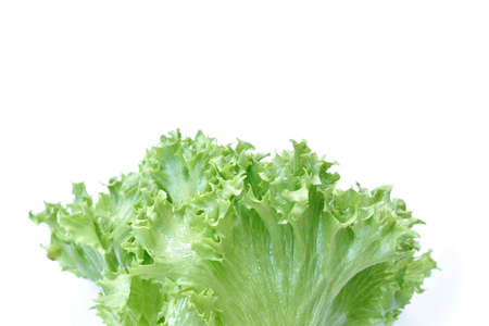 fresh green lettuce vegetable salad with drop of water arranging on white background Stockfoto