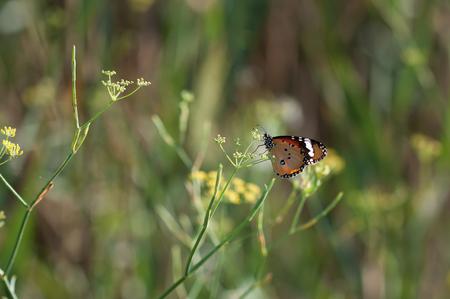 Butterfly in a green landord