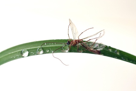 Insect killed in the grass Stock Photo - 18204867