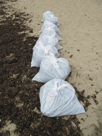 cleanup: beach cleanup