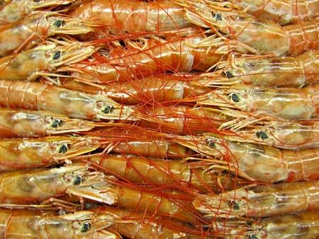 fischerei: Garnelen