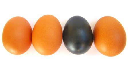 excluded: Different egg