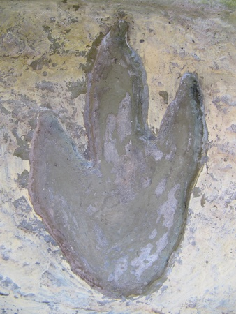 Dinosaur  footprint  photo