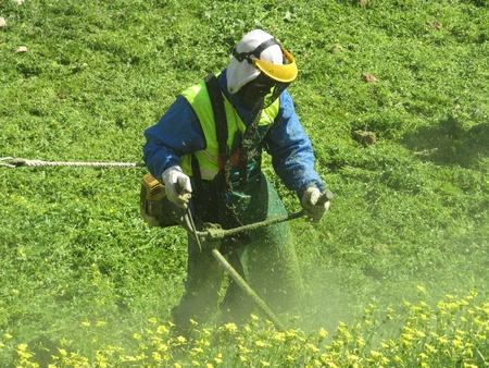 clearing: String trimmer  Man working with brush cutter in the field  Stock Photo