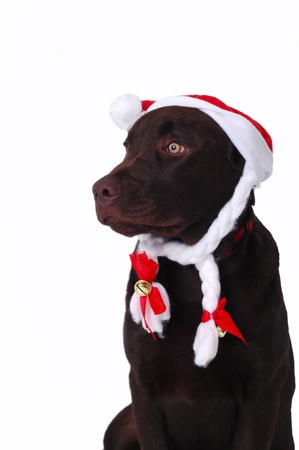 Dog laying with santa Stock Photo