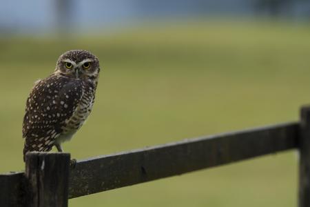 Owl yellow eyes.