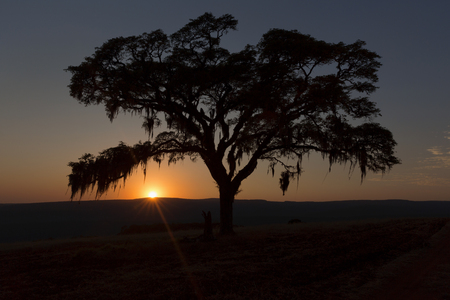 Sunset behind the tree in Senges. Imagens