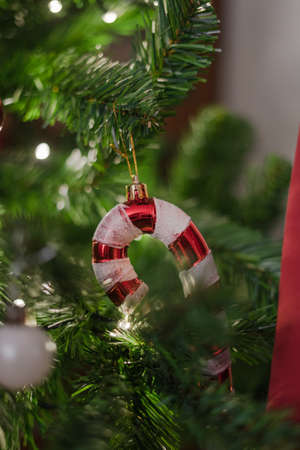 Candy cane hanging on the christmas tree | Candy cane hanging on the christmas tree