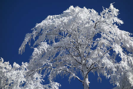 frozen trees: Winter landscape, frozen trees and a lot of snow Stock Photo