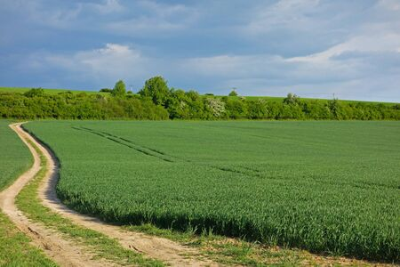 macadam: green field and macadam road next to a field and blue sky Stock Photo