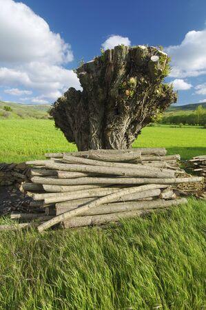 felled tree in a meadow in Teruel, Spain photo