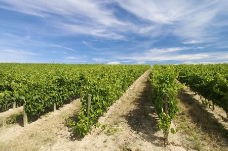 vineyard with clouds in Rioja, Spain Stock Photo - 5920799