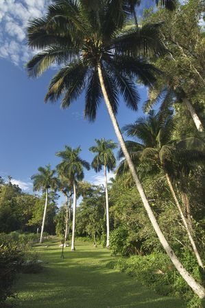 view of a jungle in Cuba Island Stock Photo - 5940274