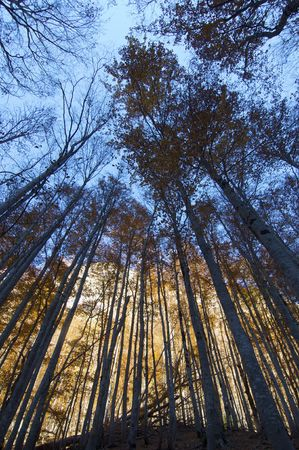 ordesa: Backlight forest in Ordesa National Park, Pyrenees, Spain
