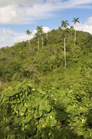 Escambray mountains in Cuba Island photo