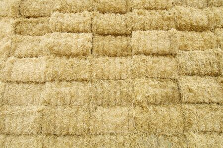 hay field: beauty background of straw bales Stock Photo