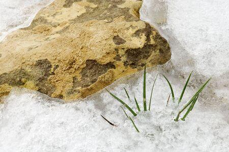 briznas de hierba peeked a través de hielo