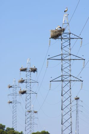 stork nest on a power line photo