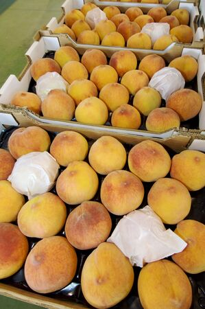 peaches in boxes ready for sale photo