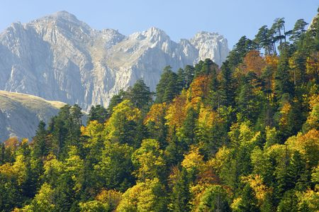 pyrenees: Fall forest in the Pyrenees mountains
