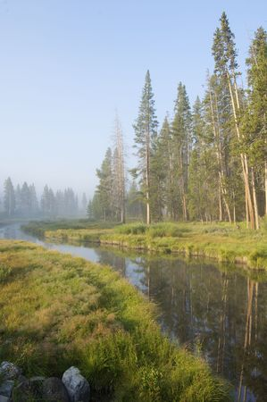 River and forest in Yellowstone National Park photo