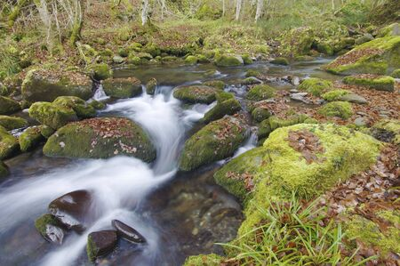 silky stream in a forest in autumn photo
