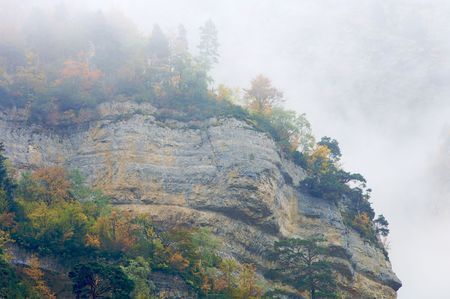 ordesa: forest in Ordesa national park, Pyrenees, Spain
